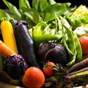 ナス・トマトなど新鮮な野菜